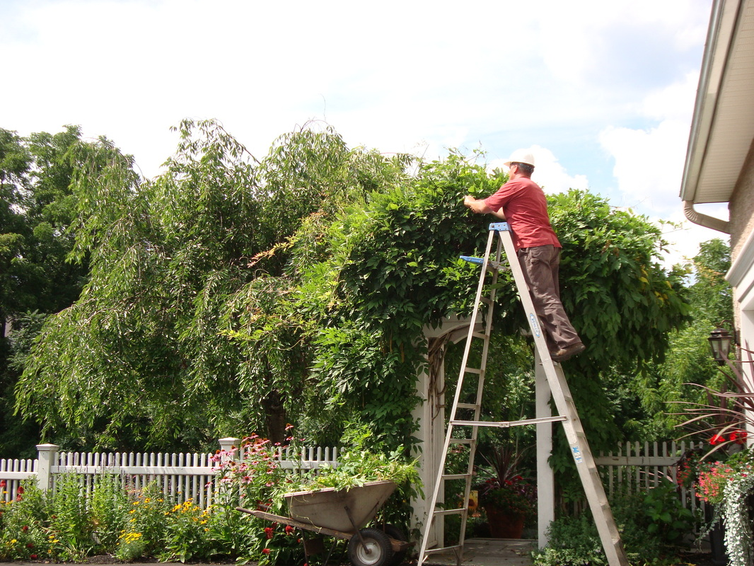 Tree pruning, shrub, perennial and vine pruning